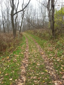 Doubletrack trail section