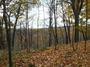 Hills and valleys of the Dundas Foret